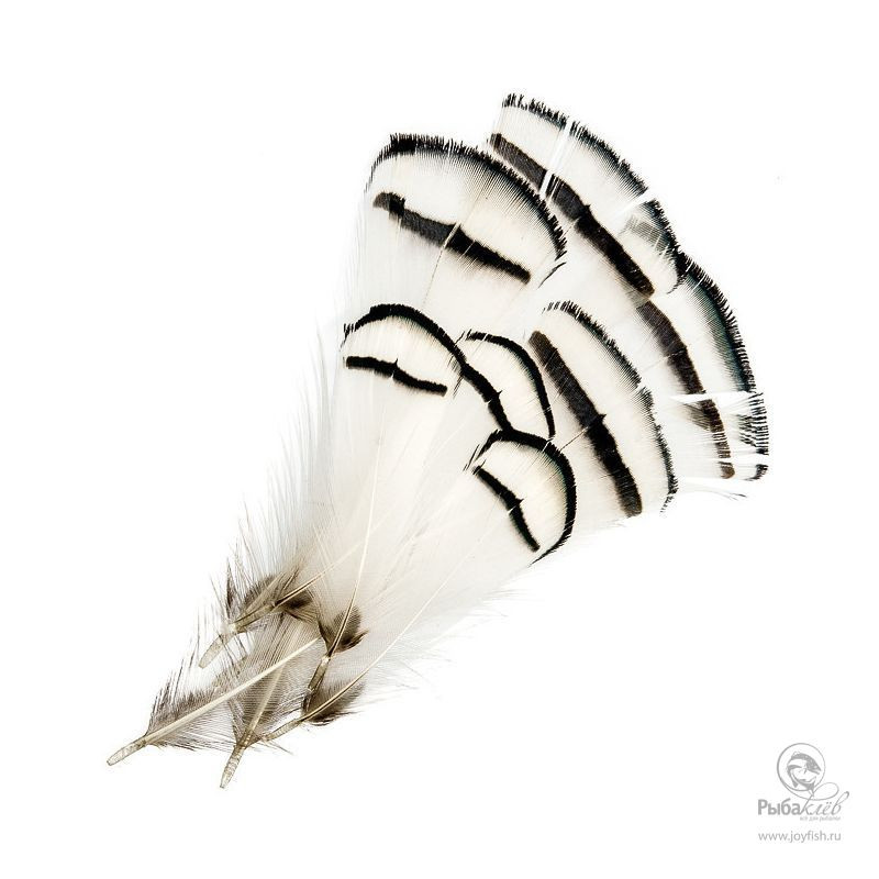 Перья Алмазного Фазана Wapsi Lady Amherst Pheasant Tippets набор даббингов wapsi sow and scud dubbing 2