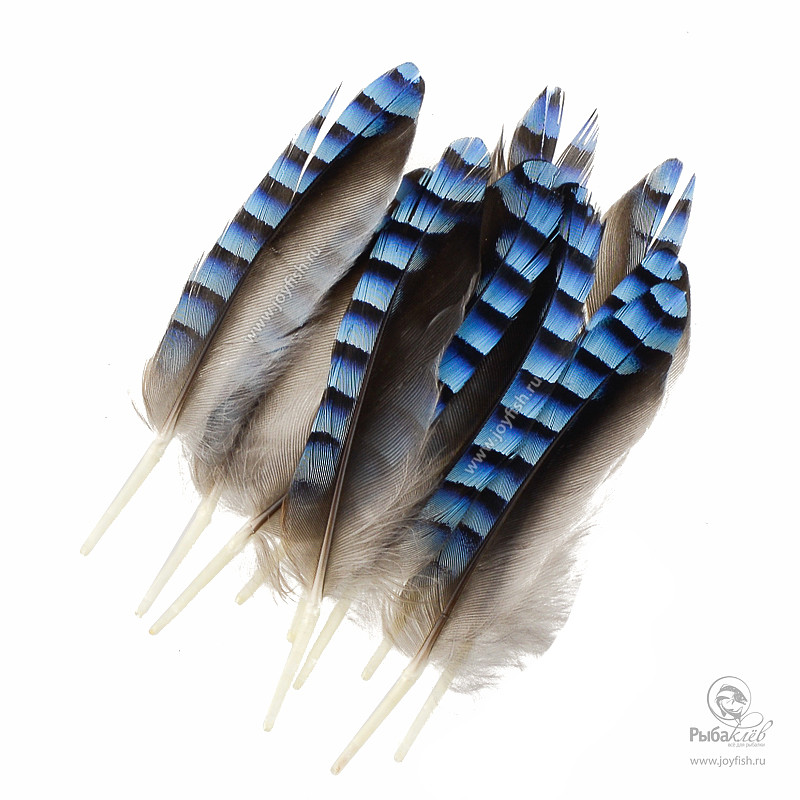 Перья Сойки Veniard Blue Jay Wing Hackles
