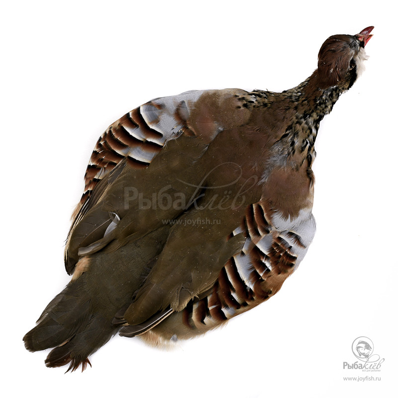 Шкура Куропатки Veniard French Partridge Complete Skin