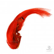 Гребень Золотого Фазана Wapsi Golden Pheasant Crest Only