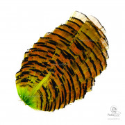 Перья Золотого Фазана Wapsi Golden Pheasant Tippet Section