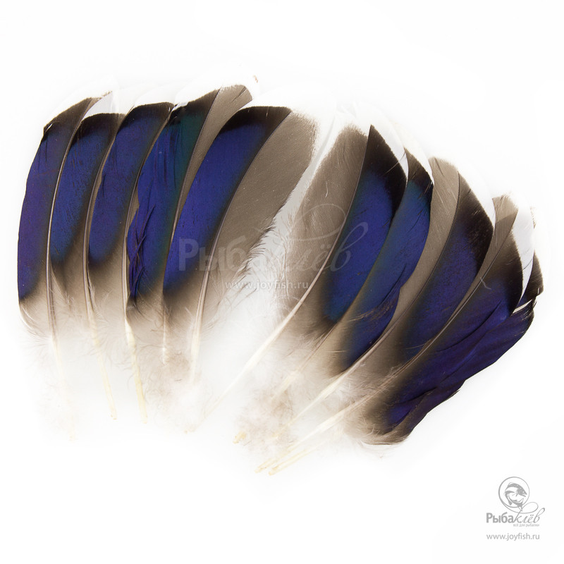 Перья Утки Veniard Mallard Duck Wing Quills with Blue White Tips