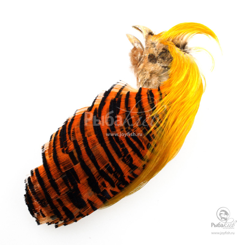 Скальп Золотого Фазана Joyfish Golden Pheasant Complete Head